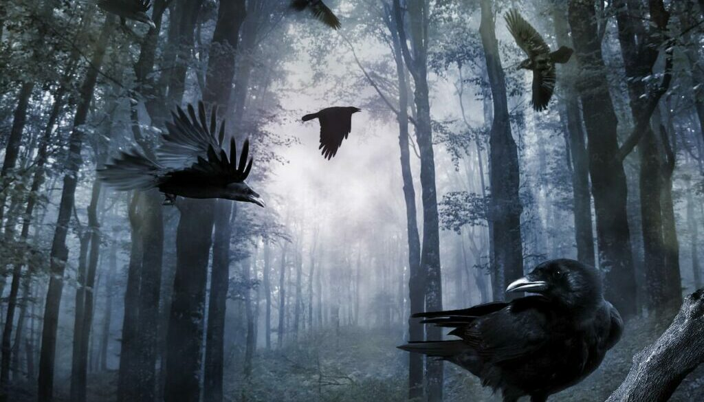crows-in-forest